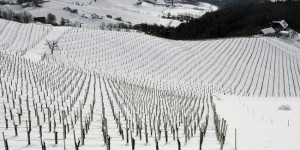 Austria - Eckberg vineyards in winter (picture credit - AWMB / Harry Schiffer)