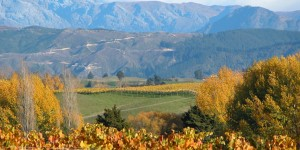 Neudorf vineyards looking over the Beuke Black 5  www.neudorf.co.nz