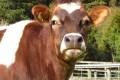Isobel - at Cwmglyn Farmhouse Cheese