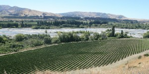 Looking down on the Villa Maria Seddon Vineyard and Awatere River