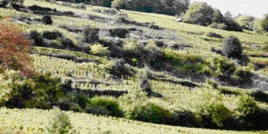 Nuits Saint Georges Monopole vineyards