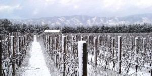 Palliser vineyard on snowy winters day