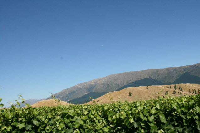 Thar's Pinot Noir in them hills - Ballochdale Estate www.ballochdaleestate.co.nz