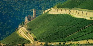 Rudesheim Berg Schlossberg, indisputably the top vineyard site in Rudesheim with its slate and quartzite soils
