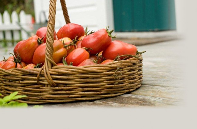 Ruth Pretty's Isle of Capri Tomatoes