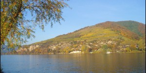 Salomon Pfaffenberg vineyard from Danube River
