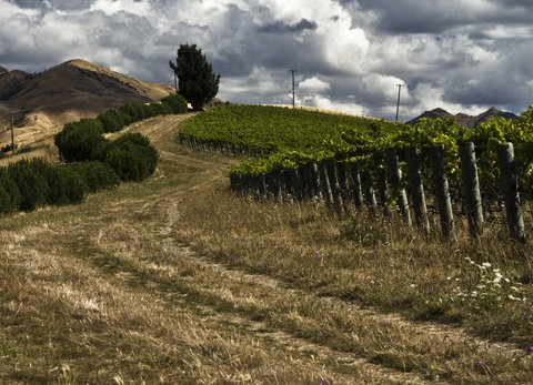Seresin Raupo Creek Vineyard