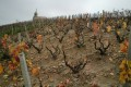 Shalom Beaujolais Blog - The steep slops of fleurie