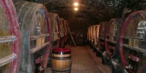 Shalom Beaujolais Blog - The Cellar at Chateau Thivin