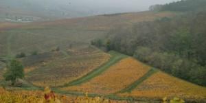 Shalom Beaujolais blog - rolling hills of Beaujolais