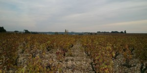 A view of Chateaunuef-du-pape  Look at how unfertile the soil is with galets so huge