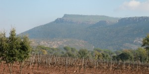 The crusty red iron-rich soils of Jas d'esclans an example of the great variation of soil types in Provence