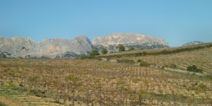 The Dentelle de Montmirail protects the  Muscat vines here from the Mistral wind