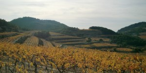 Terraces laid out at high elevation in Gigondas
