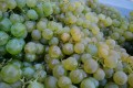 Salomon Winery Kogl Vineyard healthy riesling grapes