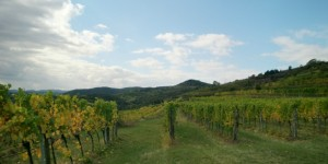 Salomon - Krems - A gorgeous day at Kogl vineyard
