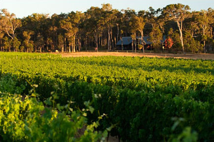 Arlewood Vineyard, Margaret River, Australia