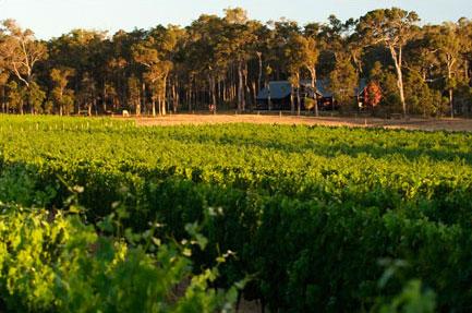 Arlewood Vineyard, Margaret River, Australia
