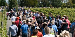 People visiting Ata Rangi vineyard, New Zealand