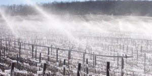 Billaud Simon Chablis vineyards frost