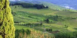 Chianti Vineyard, Italy