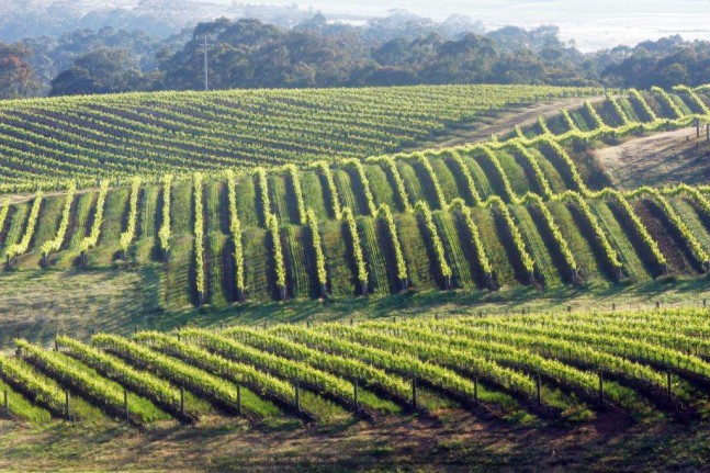 Dalwhinnie vines slopes, Australia
