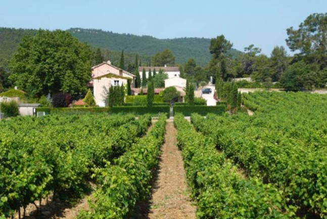 Le Grand Cros vineyard view from east