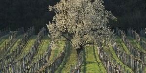 Michael Thurner - Austrian Wine Master Class