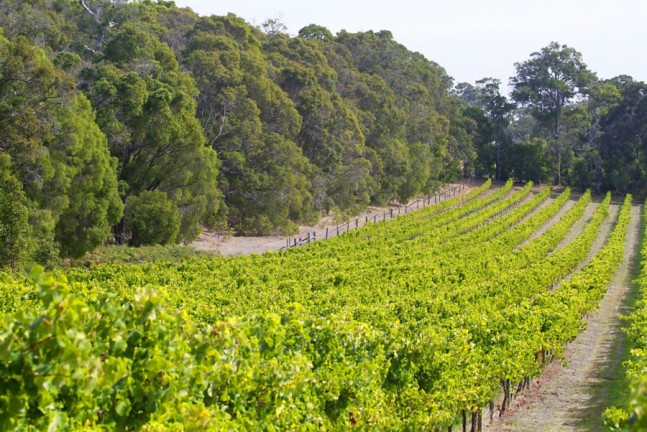 Peccavi Wines vineyard at Australia