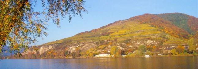 Pfaffenberg vineyard, Austria
