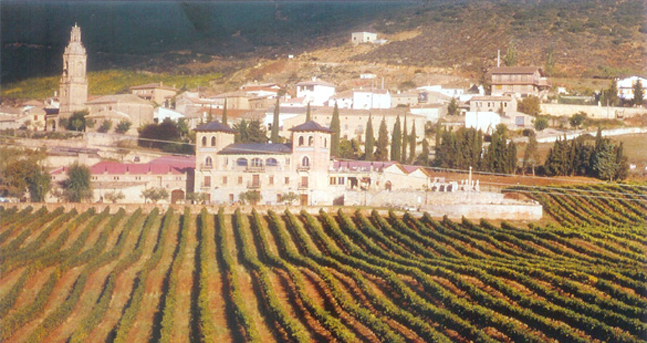 Spain Vineyard