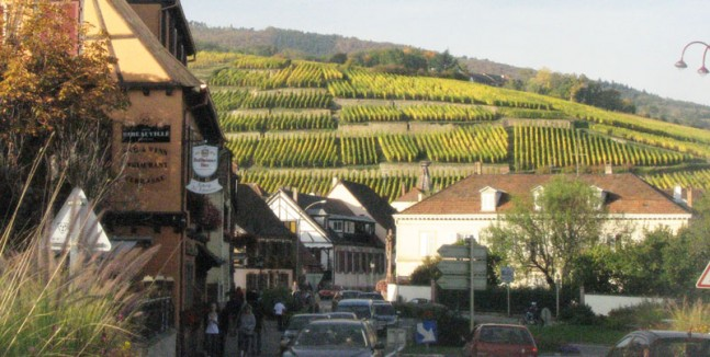 Trimbach Vineyard Alsace, France