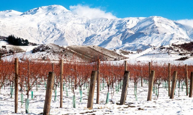 Two Paddocks vineyard scenery in winter