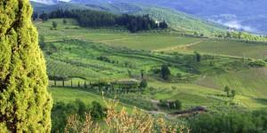 Chianti Vineyard, Italy
