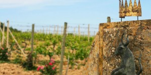 Conti Costanti vineyard, Tuscany