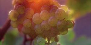 Soave Wine, Italy